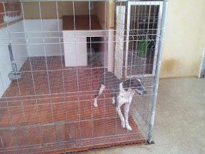 Steps to become a dog breeder